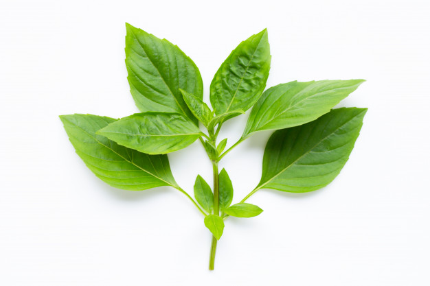 Basil Leaves vs Tulsi