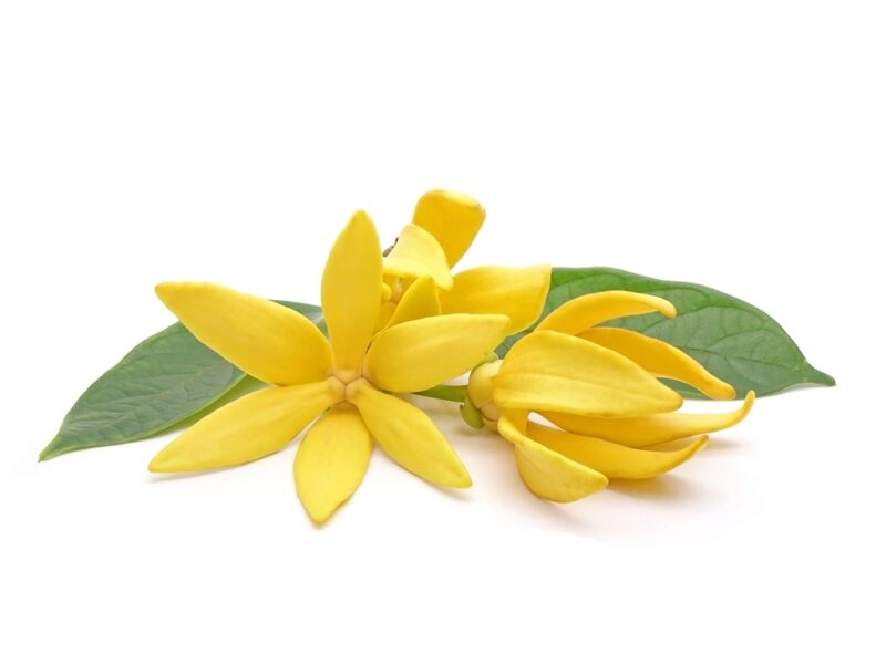 Substitute For Ylang Ylang